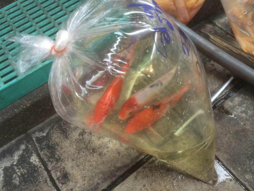 Een zak met vissen